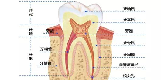 牙周炎 、