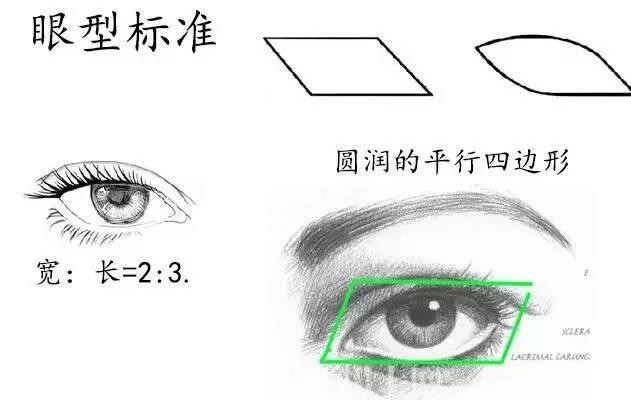 标准的眼型