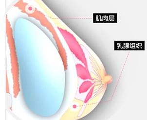 乳房的动感弹性