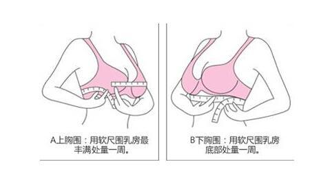 测量胸部大小
