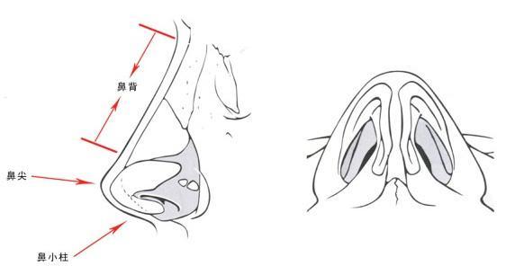 上海鼻尖缩小风险有吗,如何可以降低风险?